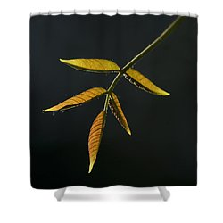 Shower Curtain featuring the photograph Emergence by Yulia Kazansky