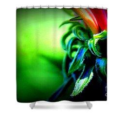 Emerging Coneflower Shower Curtain by Renee Croushore