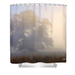 Emerging Shower Curtain by Mike  Dawson