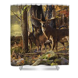 Eminence At The Forest Edge Shower Curtain by Rob Corsetti