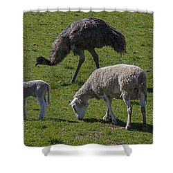 Emu And Sheep Shower Curtain