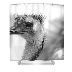 Emu - Black And White Shower Curtain by Carol Groenen