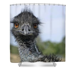 Shower Curtain featuring the photograph Emu Gaze by Belinda Greb