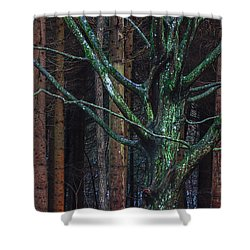 Shower Curtain featuring the photograph Enchanted Forest by Davorin Mance
