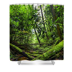 Enchanted Forest Shower Curtain by Debra and Dave Vanderlaan