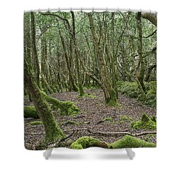 Shower Curtain featuring the photograph Enchanted Forest by Hugh Smith