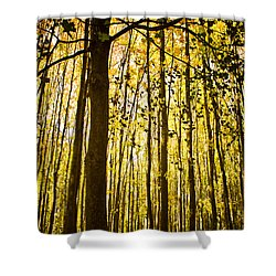 Enchanted Woods Shower Curtain by Sara Frank