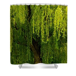 Enchanting Weeping Willow Tree  Shower Curtain by Carol F Austin
