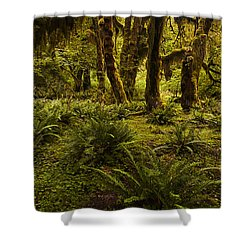Enchantment Shower Curtain by Mark Kiver