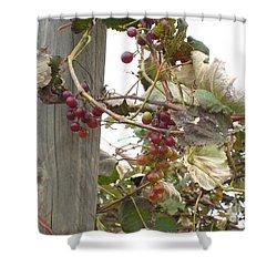 End Of Season Grapes Shower Curtain by Jennifer E Doll