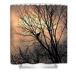 End Of The Day  Red Tailed Hawk Shower Curtain