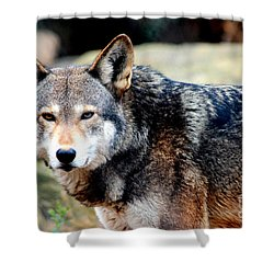 Endangered Red Wolf Shower Curtain