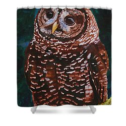 Endangered - Spotted Owl Shower Curtain by Mike Robles