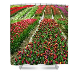 Endless Waves Of Tulips Shower Curtain
