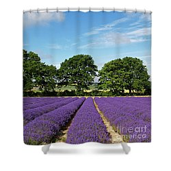 English Lavender Fields Near Selborne Hampshire Shower Curtain by Alex Cassels