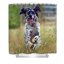 English Setter  Shower Curtain