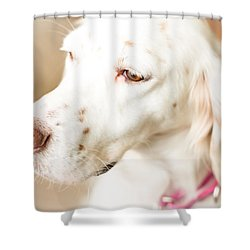 English Setter In Natural Light Shower Curtain