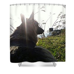 Shower Curtain featuring the photograph Enjoying The Day by Thomasina Durkay