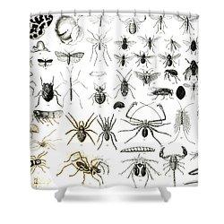 Entomology Myriapoda And Arachnida  Shower Curtain by English School