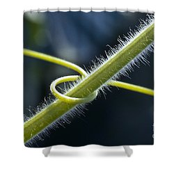 Entwined Shower Curtain by Heiko Koehrer-Wagner