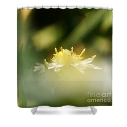 Shower Curtain featuring the photograph Enwrapped In Misty Shroud by Linda Shafer