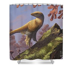 Eosinopteryx Brevipenna Perched Shower Curtain by Emily Willoughby