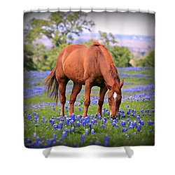 Equine Bluebonnets Shower Curtain by Stephen Stookey