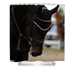 Equine Concentration Shower Curtain