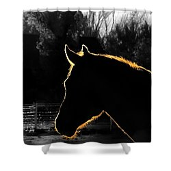 Equine Glow Shower Curtain