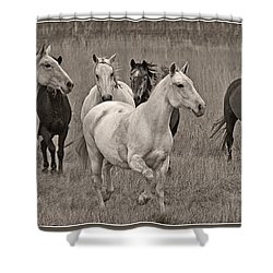 Escapees From A Lineup Shower Curtain by Wes and Dotty Weber