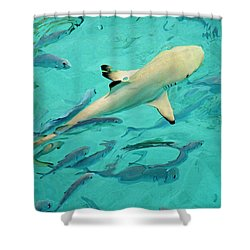 Escort  Shower Curtain by Jenny Rainbow