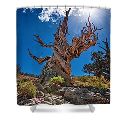 Eternity - Dramatic View Of The Ancient Bristlecone Pine Tree With Sun Burst. Shower Curtain