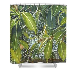 Euca - Leaves Section Shower Curtain by Kerryn Madsen-Pietsch