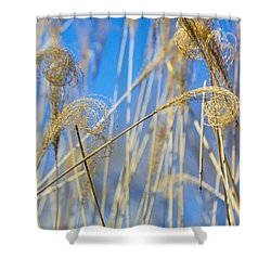 Eulalia Grass Native To East Asia Shower Curtain by Anonymous