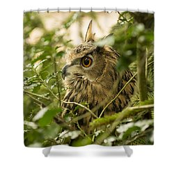 Eurasian Eagle-owl 2 Shower Curtain