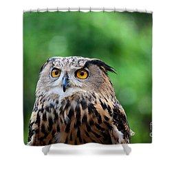 Eurasian Or European Eagle Owl Bubo Bubo Stares Intently Shower Curtain