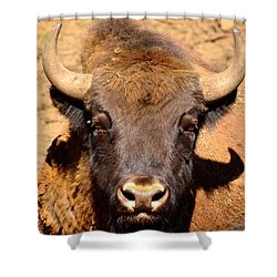 European Bisons Shower Curtain by Tommytechno Sweden