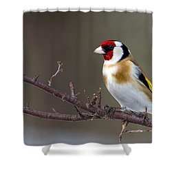 European Goldfinch  Shower Curtain by Torbjorn Swenelius