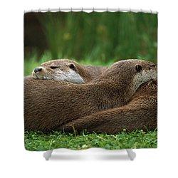 European River Otter Lutra Lutra Shower Curtain