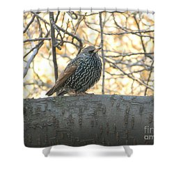 Shower Curtain featuring the photograph European Starling by Emmy Marie Vickers