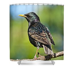 European Starling In A Tree Shower Curtain