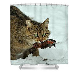 European Wildcat Shower Curtain
