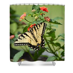 Evening Beauty Shower Curtain by Debbie Green