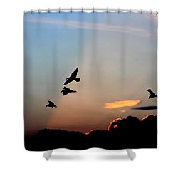 Evening Dance In The Sky Shower Curtain by Bruce Patrick Smith