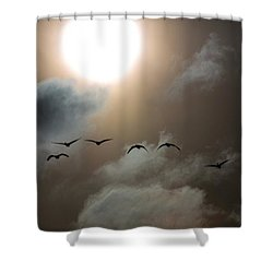 Evening Flight Shower Curtain
