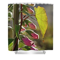 Evening Foxglove Shower Curtain by Adria Trail