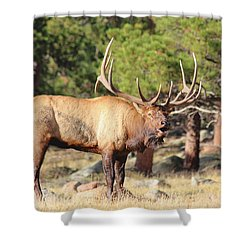 Evening Roundup Shower Curtain
