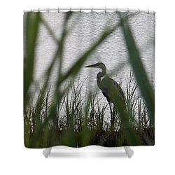 Shower Curtain featuring the photograph Evening Stroll by John Glass