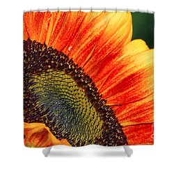Evening Sun Sunflower Shower Curtain