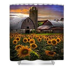 Evening Sunflowers Shower Curtain by Debra and Dave Vanderlaan